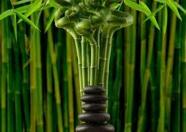 bambu 1
